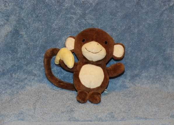 monkey shown in front of blue background